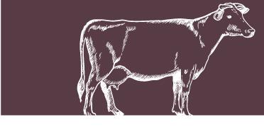 Tripa vaca_2